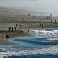 Pela primeira vez se calcula o prejuízo financeiro da elevação do nível dos oceanos. Só na Califórnia, o valor chega a US$ 2,5 bilhões. No Brasil, os gastos serão ainda […]