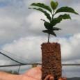 O Núcleo de Educação Ambiental da PMA de Campo Grande, a PMA de Costa Rica e Coxim e o Projeto Florestinha, em comemoração ao dia internacional da árvore (21/setembro), estarão […]