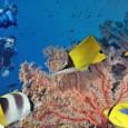 Atividades humanas em alto mar se multiplicaram nas últimas décadas levando ao aumento dos níveis de ruído nos oceanos.Embora ainformaçãosobre o assunto ainda seja limitada, pesquisadores e oceanógrafos suspeitam que […]