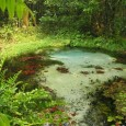 Parlamentares armaram uma surpresa para o plano do governo de reduzir três parques na Amazônia por medida provisória: colocaram no texto emendas que acabam com 650 mil hectares de outras […]