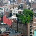 Há algumas décadas, construtores e arquitetos de todo o mundo começaram a adotar os telhados verdes na hora de projetar e construir casa de clientes que prezavam por um ambiente […]