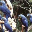 Encontro promove consultas públicas com diferentes setores para construção do plano nacional de biodiversidade. Ministério do Meio Ambiente, entidades parceiras como WWF-Brasil, União Internacional de Conservação da Natureza (IUCN) e […]