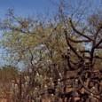 O manejo florestal pode ser um instrumento para reduzir a pobreza entre os assentados da reforma agrária na Caatinga. A renda bruta que um agricultor familiar obtém com o manejo […]