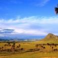 O Cerrado ocupa 22% do território nacional, espalhado por 1.445 municípios em 10 estados e no Distrito Federal. De acordo com o IBGE, aproximadamente 15% da população nacional vive neste […]