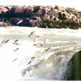 Vai de 05 de novembro a 28 de fevereiro de 2012 o período de proibição da pesca para a reprodução natural do estoque pesqueiro. A resolução nº 024 da Secretaria […]