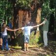 Artistas e pesquisadores pedem aos senadores que evitem as mudanças que pioram o Código Florestal Brasileiro A campanha #florestafazadiferença lança nesta terça, 18, uma série de vídeo-depoimentos feitos por pessoas […]