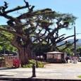 A poda radical de árvores que vem desagradando os petropolitanos e modificando a paisagem de tradicionais ruas do Centro Histórico de Petrópolis, como a tombada Avenida Koeler e vias de […]