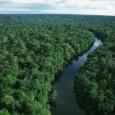 O Brasil poderia ter poupado metade de suas florestas incendiadas, caso já tivesse regulamentado o uso de retardantes no combate ao fogo. A estimativa é do professor Alexandre Beutling, doutor […]