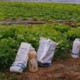 No Brasil, a segunda maior causa de intoxicação depois de medicamentos é por agrotóxicos, segundo o Ministério da Saúde. Em 2008, o país ultrapassou os Estados Unidos e assumiu o […]