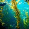 À medida que temperatura sobe, alguns herbívoros crescem mais rápido que as plantas, tornando o alimento escasso, diz pesquisa. Se isso acontecer, poderá faltar peixe para os seres humanos O […]