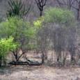 Brasília – Os efeitos do desmatamento na nova fronteira agrícola do Cerrado – formada pelo Maranhão, Tocantins, Piauí e pela Bahia – são menos conhecidos e estudados pela ciência do […]