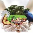 Nova versão da reforma do Código Florestal apresentada hoje no Senado prevê o desconto no Imposto de Renda de gastos com a recomposição de vegetação nativa nas propriedades rurais do […]