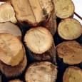 Uma iniciativa da Secretaria de Meio Ambiente e Sustentabilidade de uma cidade do interior de São Paulo vai transformar galhos e restos de madeira descartados como lixo em energia limpa, […]
