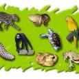 A proteção de espécies ameaçadas de extinção no Brasil será tema de colóquio promovido pela Comissão de Meio Ambiente do Senado (CMA). Aberto ao público, o evento será realizado na […]