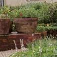 Preparar receitas e chás com ervas colhidas no quintal é especialmente saboroso: elas estão sempre frescas, livres de agrotóxicos e seu cultivo pode render bons momentos de descontração. A falta […]
