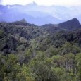 Uma operação conjunta envolvendo 220 homens das polícias Civil, Militar e Federal flagrou crimes ambientais e fechou uma carvoaria que queimava árvores de manguezais da Baía de Guanabara. Também foram […]