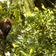 De acordo com dados do Inpe, redução é de 38% na comparação com o mesmo mês no ano passado O desmatamento da Amazônia Legal em agosto teve o menor índice […]
