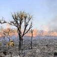 Levantamento avalia que podemos esperar por desastres naturais ainda piores e diagnostica aumento na emissão de gases nocivos no Brasil O mundo ainda está longe de alcançar as metas de […]