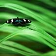 A ministra do Meio Ambiente, Izabella Teixeira, afirma que a criação das Unidades de Conservação (UCs) foi fundamental para barrar o desmatamento na Amazônia. Em entrevista ao GLOBO neste sábado, […]