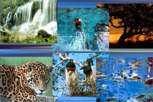 Ecoturismo no Pantanal