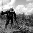 O trabalho escravo rural no Brasil é uma das peças que constituem o desenvolvimento do capitalismo de ponta no país. Divulgado na terça-feira 26, um relatório da Organização Internacional do […]