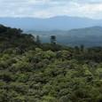 A recuperação de áreas degradadas é um dos principais desafios para cientistas, poder público e todos os atores sociais que buscam reverter o processo de destruição das florestas. No Espírito […]
