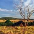 A elaboração de um marco regulatório para a exploração do Cerrado foi dos principais assuntos discutidos nos dois dias de realização do 3º Seminário de Agroextrativismo no Cerrado, promovido pela […]