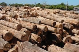 Rede Amigos da Amazônia lança livro sobre consumo responsável da madeira a partir de ações do poder público