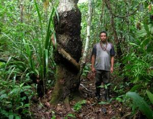 Pesquisador do Museu Paraense Emílio Goeldi conta história da descoberta de formigueiros em troncos de árvores no Peru. Foto: © G.H. Shepard |