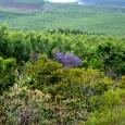 """EUA prometem US$ 450 milhões à Indonésia para crescimento econômico verde (Foto: Gabriela Campêlo) O governo dos EUA prometeu mais de US$ 450 milhões para um """"crescimento verde"""" na Indonésia, […]"""