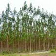 A empresa Energia Renováveis do Brasil, especializada na produção de biomassa, foi habilitada a receber incentivos do governo da Bahia, direcionados à diversificação da matriz energética no estado. A sede […]