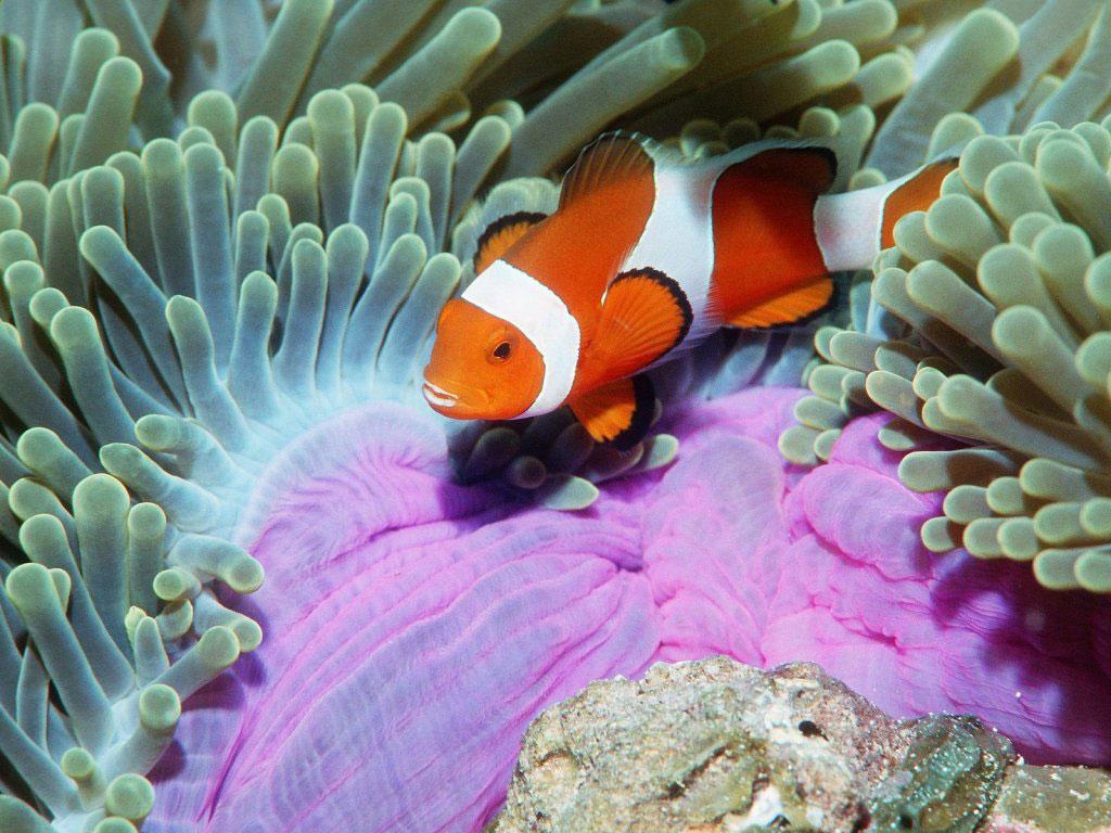 """""""Para que os recifes continuem produtivos, os países devem introduzir medidas de controle contra a pesca predatória e também fiscalizar com mais rigor"""", afirmou Tim McClanahan, da Sociedade Mundial de Conservação."""