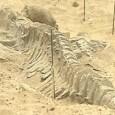 Paleontólogos descobriram um grande cemitério de baleias pré-históricas no deserto do Atacama, no norte do Chile. Oito fósseis de mais de sete milhões de anos foram achados no local. O […]