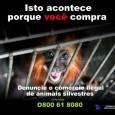 """""""Falta inteligência policial na repressão ao tráfico de animais"""", adverte o Marcelo Pavlenco Rocha, presidente daSOS Fauna, uma entidade com 22 anos de atividade no combate a esse crime que […]"""