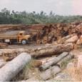 O desmatamento na Amazônia caiu 43% em setembro comparado com o mesmo mês do ano passado. Os dados são do Inpe (Instituto Nacional de Pesquisas Espaciais) e foram divulgados nesta […]