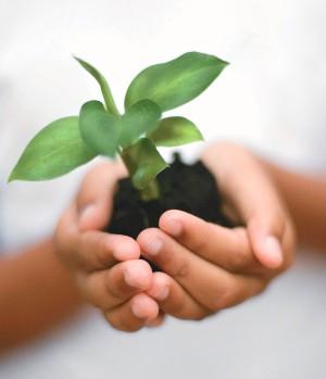 Plante árvores e ajude a preservar a planeta.