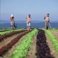 O Ministério do Desenvolvimento Agrário (MDA) realizachamamento públicopara selecionar projeto de avaliação da inclusão social e produtiva da agricultura familiar no Programa Nacional de Produção e Uso de Biodiesel (PNPB). […]
