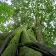 Apesar do acordo firmado entre a base aliada e a oposição no Senado – cujos líderes haviam acertado votar o projeto de lei do novo Código Florestal na quarta-feira, 30 […]