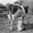 Leite e mel não-pasteurizados Nada como ir para a roça e beber o leite direto da vaca. Mas essa sensação de estar em contato com a natureza pode também trazer […]