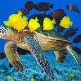 Condições químicas do oceano e nível do mar determinaram biodiversidade Um novo estudo, publicado na Science, mostra que a evolução da vida marinha nos últimos 500 milhões de anos foi […]