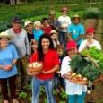 O Ministério do Desenvolvimento Agrário (MDA) acaba de definir metas para investimento na produção de alimentos agroecológicos e orgânicos no Plano Plurianual do Governo Federal (2012-2015). Entre elas estão a […]