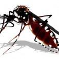 O país contará com um importante aliado para combater a dengue no próximo ano. Um bioinseticida desenvolvido pela Fundação Oswaldo Cruz (Fiocruz) e fabricado por uma indústria farmacêutica promete […]
