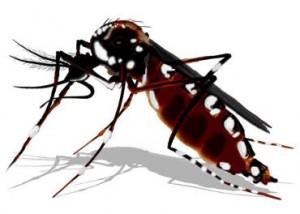 Brasil terá bioinseticida contra dengue em 2012