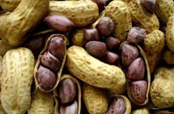 Seja por conterem substâncias venenosas ou por apresentarem alto risco de alergia, alguns alimentos são perigosos para a saúde.