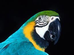 Vamos divulgar pelo mundo afora: Tráfico de Animais Silvestres no Brasil