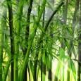 Uma tecnologia desenvolvida por uma organização da China pode ajudar a alavancar o setor de bioenergia no continente africano, reduzir o ritmo de desmatamento e, consequentemente, o impacto da mudança […]