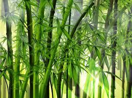 Parceria da China com países africanos quer fomentar técnica de biomassa. Material reduziria desmatamento e emissão de gases de efeito estufa.