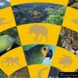O Ministério do Meio Ambiente está com consulta pública aberta pela internet para o Plano Estratégico da Convenção sobre Diversidade Biológica para 2020. O documento foi preparado e discutido ao […]