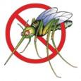 O país contará com um importante aliado para combater a dengue no próximo ano. Um bioinseticida desenvolvido pela Fundação Oswaldo Cruz (Fiocruz) e fabricado por uma indústria farmacêutica promete ser […]