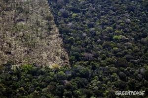 Desmatamento documentado este ano pelo Greenpeace. Foto: © Greenpeace/Marizilda Cruppe